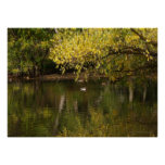 Autumn at Beus Pond Posters
