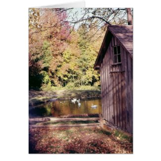 Autumn at Bronte Creek card
