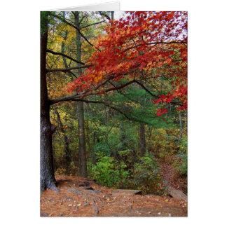 Autumn at Shark River Park Card