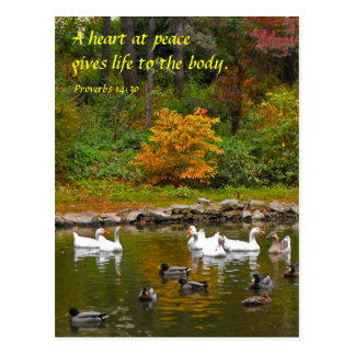 Autumn at the Duck Pond Postcard
