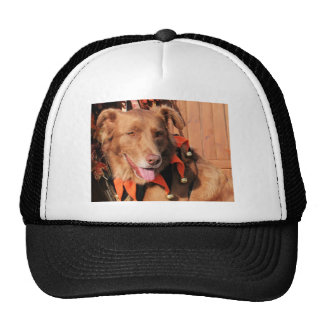 Autumn - Australian Shepherd Hybrid Photo-11 Trucker Hat