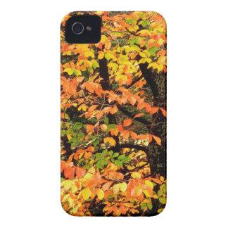 Autumn Beech Tree In Park Portland Oregon iPhone 4 Case