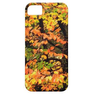 Autumn Beech Tree In Park Portland Oregon iPhone 5 Cover