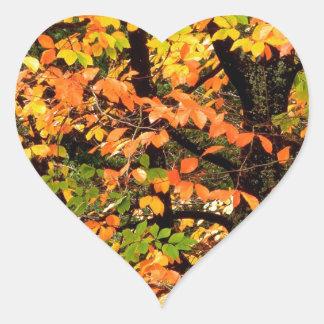 Autumn Beech Tree In Park Portland Oregon Heart Sticker