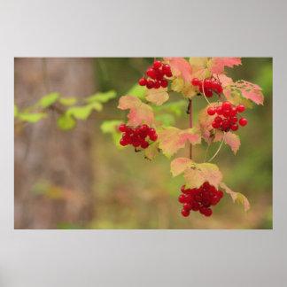 Autumn Berries Print