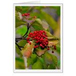 Autumn Berries XMAS Card 2012
