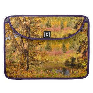 Autumn Birch Tree MacBook Pro Sleeve