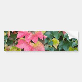 Autumn Boston Ivy Bumper Sticker