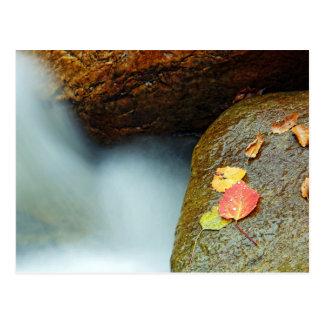 Autumn brook postcard