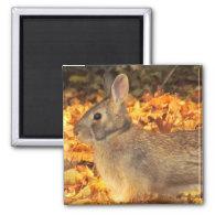 Autumn Bunny Magnet