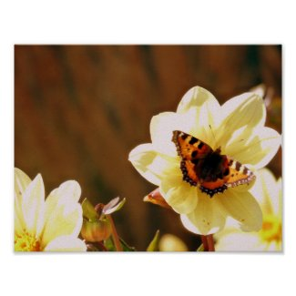 Autumn Butterfly Poster