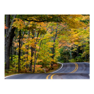 Autumn Canopy Of Color Along Highway 41 Postcard