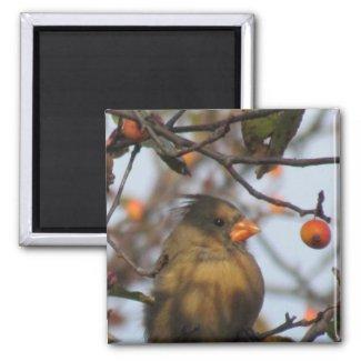 Autumn Cardinal magnet