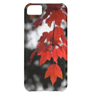 Autumn Case For iPhone 5C