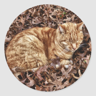 Autumn Cat Classic Round Sticker