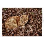 Autumn Cat Greeting Cards