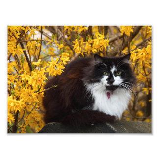 Autumn cat photo print