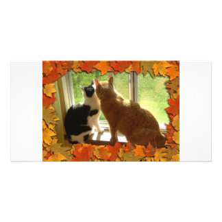 Autumn Cats Photo Greeting Card