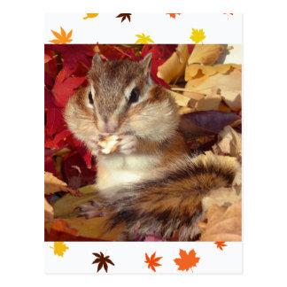 autumn_ chipmunk_ (7) postcard