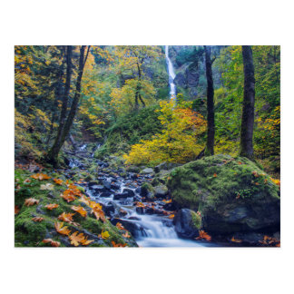 Autumn Color Along Starvation Creek Falls 2 Postcard