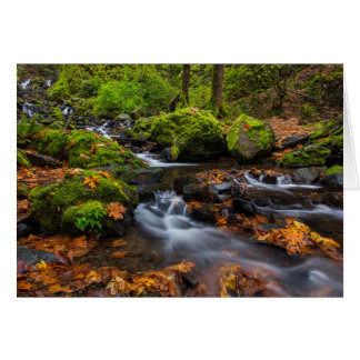 Autumn color along Starvation Creek Falls Card