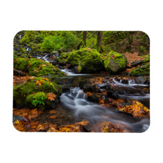 Autumn color along Starvation Creek Falls Magnet