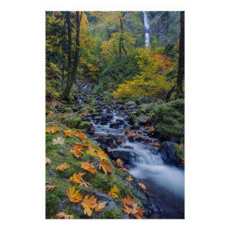 Autumn Color Along Starvation Creek Falls Poster