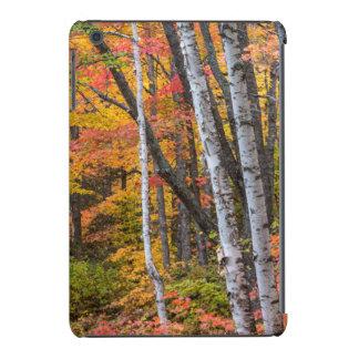 Autumn Color In The Forest Near Copper Harbor iPad Mini Retina Covers
