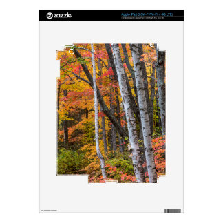 Autumn Color In The Forest Near Copper Harbor Decal For iPad 3