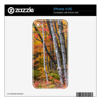 Autumn Color In The Forest Near Copper Harbor Decal For The iPhone 4