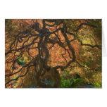 Autumn color Maple trees, Victoria, British 2 Greeting Card