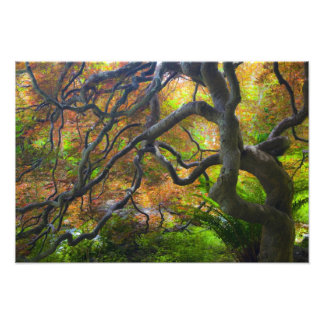 Autumn color Maple trees, Victoria, British 2 Photograph