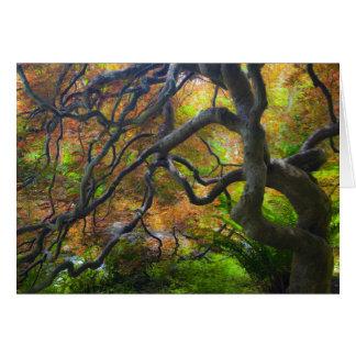 Autumn color Maple trees, Victoria, British 3 Card
