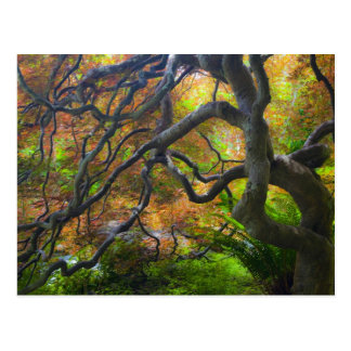 Autumn color Maple trees, Victoria, British 3 Postcard