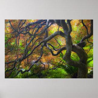 Autumn color Maple trees, Victoria, British 3 Poster
