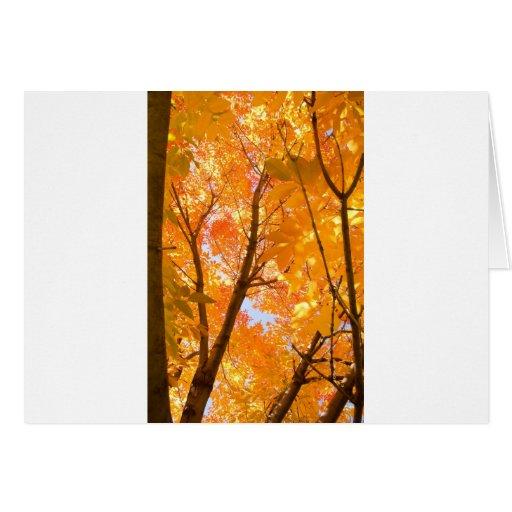 Autumn Color Mood Greeting Card