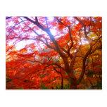Autumn Color Postcards
