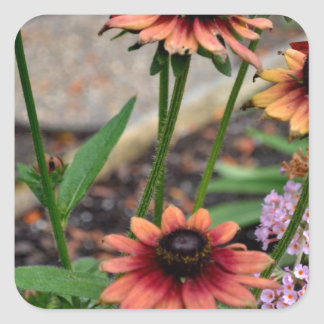 Autumn Colored Blackeye Susans Square Sticker