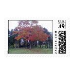 Autumn Colored tree Postage