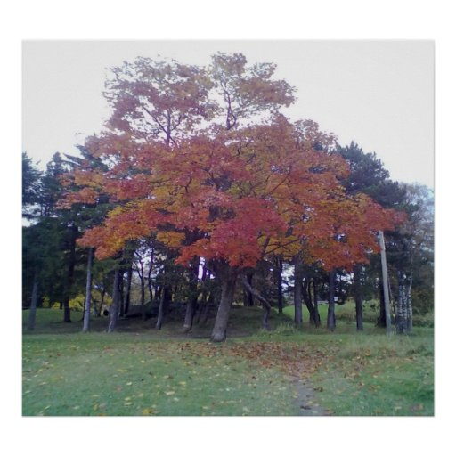 Autumn Colored tree Poster