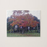 Autumn colored Tree Puzzles