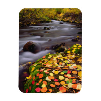 Autumn Colors along McGee Creek Magnet