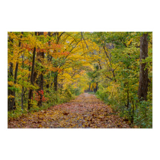 Autumn Colors At Independence State Park Poster