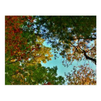 Autumn Colors Display Postcard