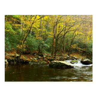Autumn Colors in Great Smoky Mountains Postcards