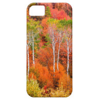Autumn Colors In Rocky Mountains, Wyoming, USA Case For iPhone 5/5S