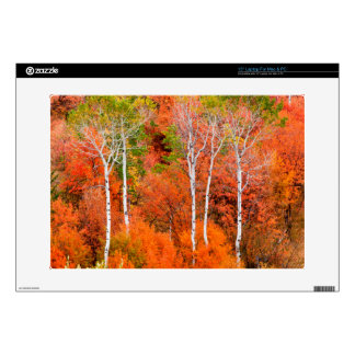 Autumn Colors In Rocky Mountains, Wyoming, USA Decal For Laptop