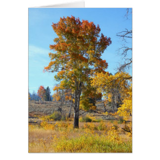 Autumn Colors in Yellowstone Card