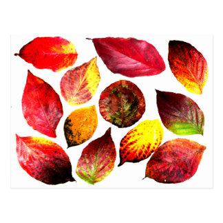 Autumn Colors Leaf Display Postcard