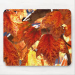 Autumn Colors Mouse Pads